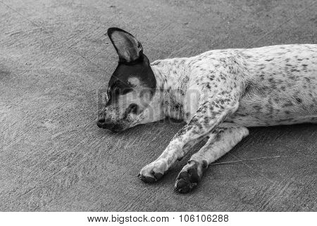 The Homeless Dog Sleeping On Cement Floor