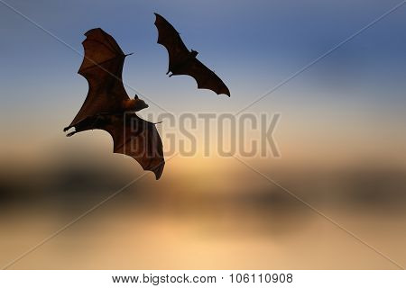 Bat Silhouettes With Colorful Lighting - Halloween Festival