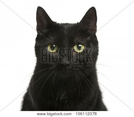 Close-up of a Black cat in front of white background