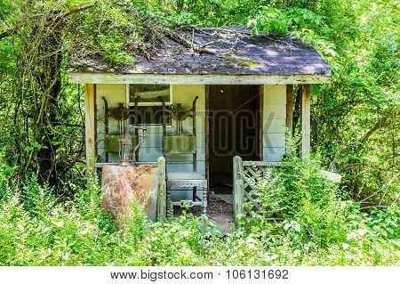 Old Shack Overgrown In Woods