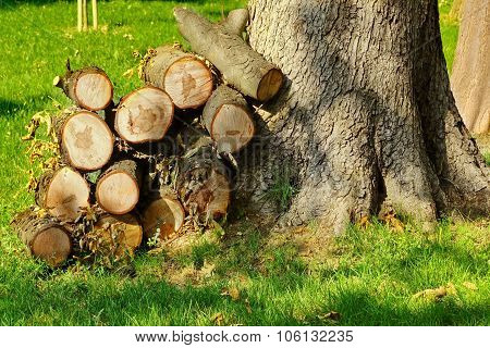 Woodpile Near Large Tree On The Park Lawn