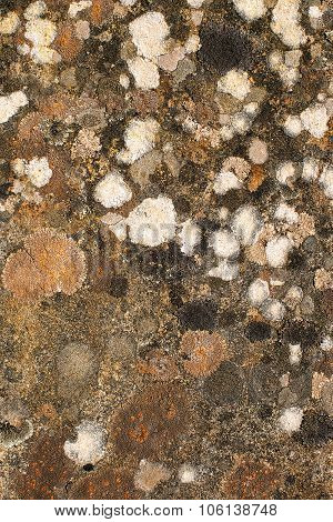 Multicoloured Lichen On Rock