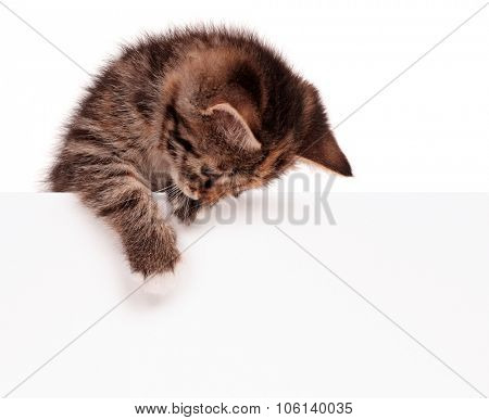 Cute kitten with blank billboard, isolated on white background