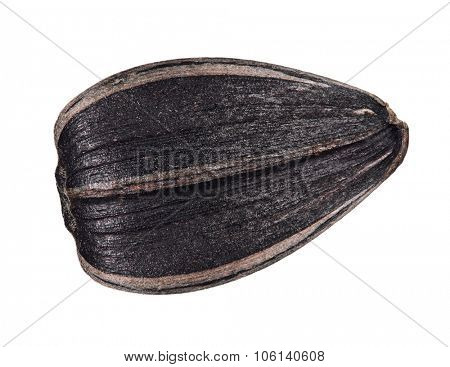 Perfect sunflower seed isolated on white background
