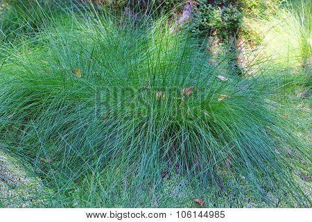 wonderful bush grass