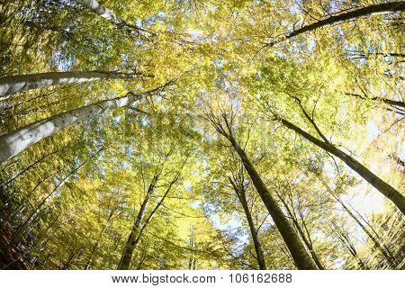 Green forest, greenery from  lower perspective