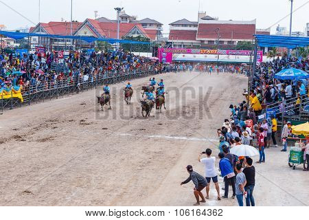 Buffalo Racing Festival In Chonburi Thailand