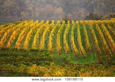 Cloudy autumn in Wachau valley