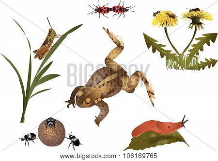 Nature set - small fauna and flora