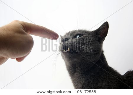 The Hand With The Index Finger Indicates A Gray Cat