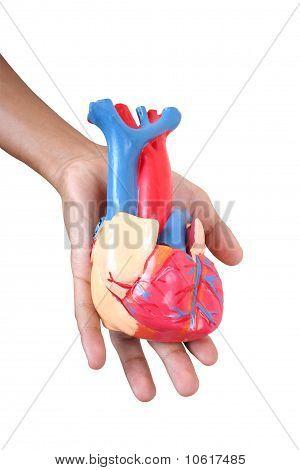Close-up heart