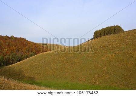 Autumn Pastures