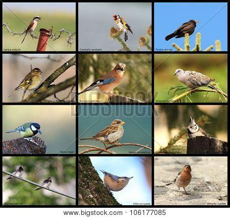 Collection Of Garden Birds