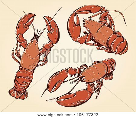 Set Of Hand Drawn Lobsters Or Crayfishes