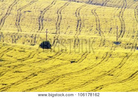 Textured Turnip Field