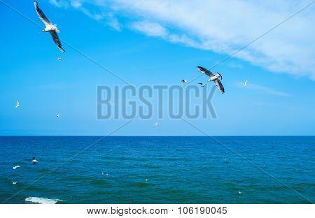 Gulls flying over sea