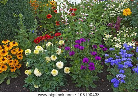 Bright Flowers On The Flowerbed