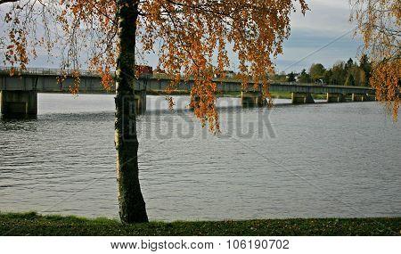 A river, a bridge and a tree