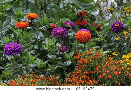 beautiful multicolored flowerbed in garden horizontal picture
