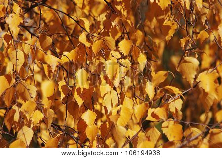 Birch Leave Forming A Background