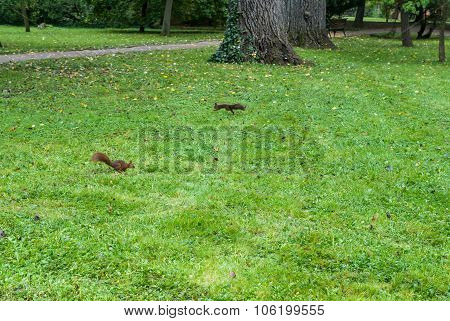 Two Squirrels On The Grass With Autumn Leaves