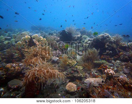 Reef Underwater Bali