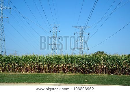 Power Lines Over a Corn Field