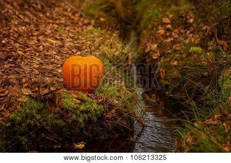Halloween pumpkin on leaves in woods