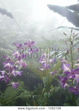 Orchids In Mist