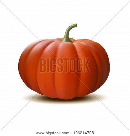 Orange realistic pumpkin