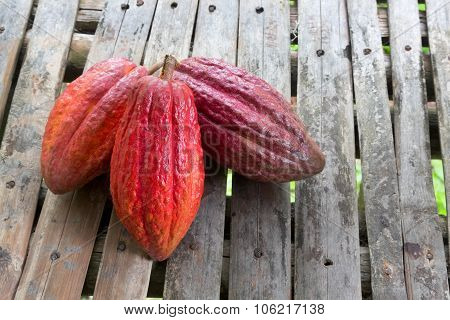 Ripe Cocoa Pods For Chocolate