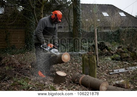 To Cut A Tree