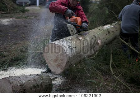 Sawing Tree Trunk