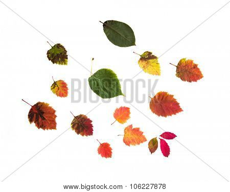 nature, season, autumn and botany concept - set of many different fallen autumn leaves