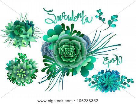 Cute succulent vignettes