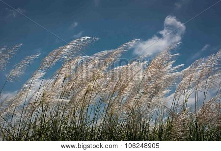 Reed Flower