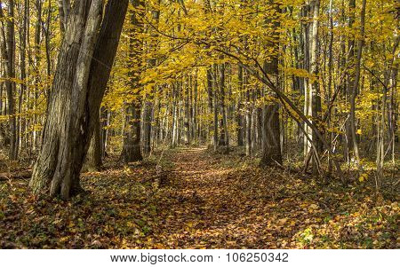 Winding Forest Path In Autumn