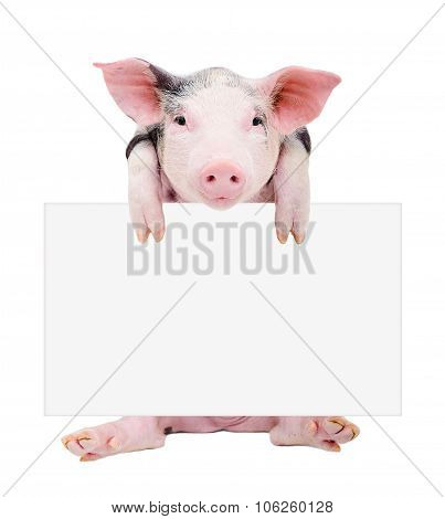 Cute piglet sitting with a banner
