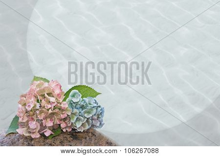 Hydrangea Blossoms And Wavy Background, Sympathy Design
