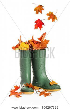Autumn leaves in wellington boots on a white background