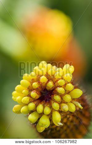 Tropical Flower Spike