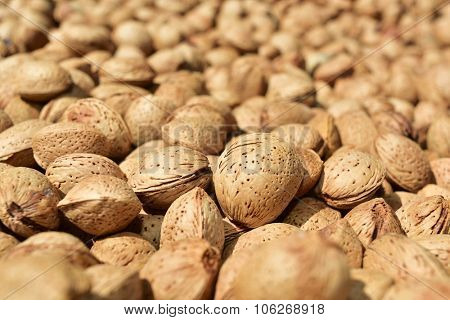 closeup of a pile of almonds in shell after harvesting