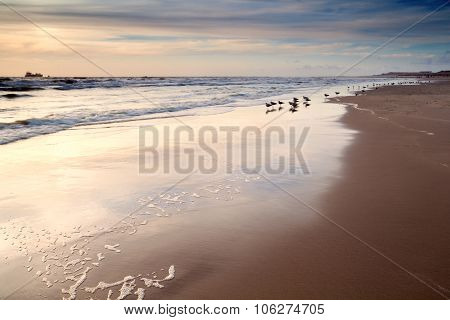 Seagulls On Sand Beach At Sunset
