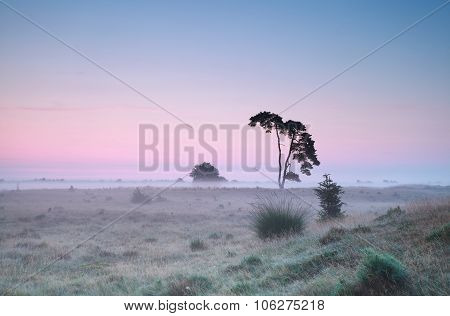 Tranquil Summer Sunrise And Lone Pine Tree