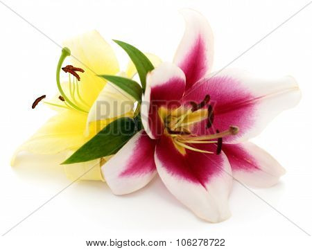 Two Lilies.