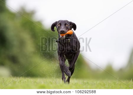 Mixed Breed Dog Outdoors In Nature