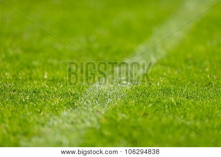 Closeup Of Soccer Turf