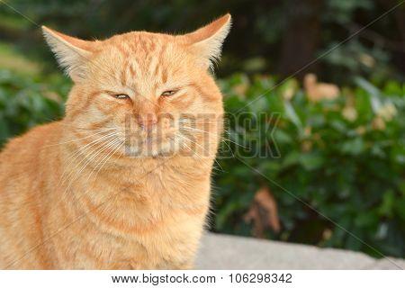 Big Red Cat Eyes
