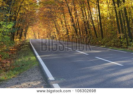 The road in autumn
