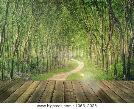 Enchanting Forest Lane in a Rubber Tree Plantation Concept